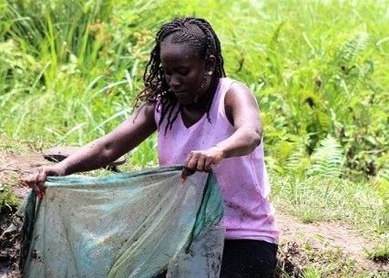 Meet Aminata Fatmata Kandeh, a young lady using technology to standardise fish farming in Sierra Leone