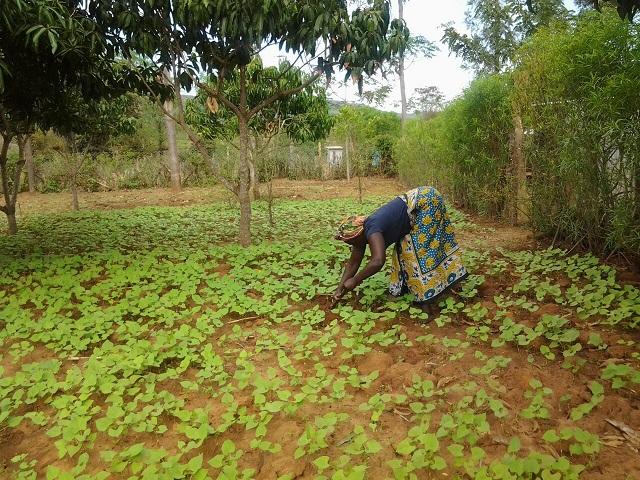 Farmer using ITIKI Solutions